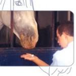 Comida al caballo